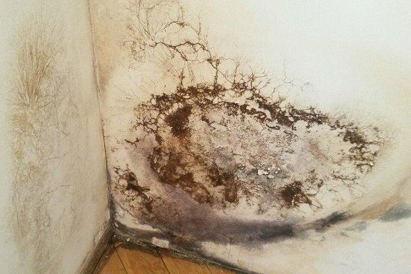 Чем опасна черная плесень в доме для организма человека и как от нее избавиться