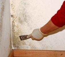 Как убрать грибок в ванной: обзор лучших способов удаления грибка